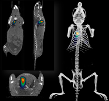 Quantitative Optical and Computed Tomography